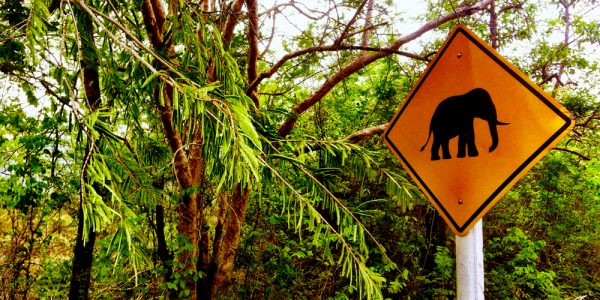 Elephant crossing!